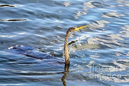 Sticking Your Neck Out by Chuck Hicks