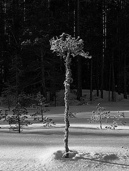 Still alive bw by Jouko Lehto