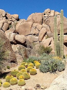 Still Life in Desert by Glenda Zuckerman