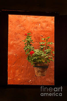 Patricia Hofmeester - Still life in orange