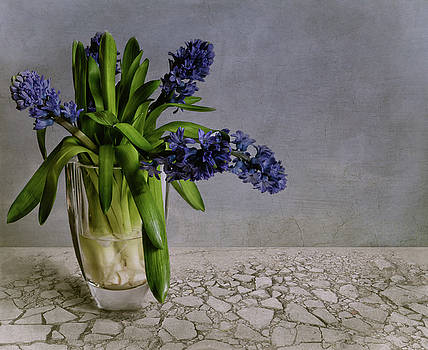 Still Life With Hyacinth by Claudia Moeckel