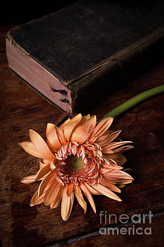 Still life with orange flower and old Bible by Edward Fielding