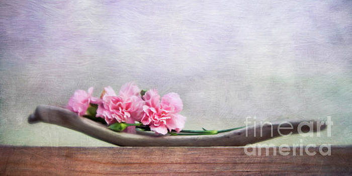 Still Life With Pink Carnations And Driftwood by Priska Wettstein