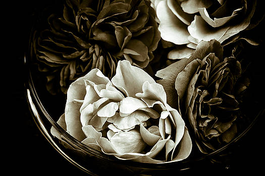 Still Life With Roses by Frank Tschakert