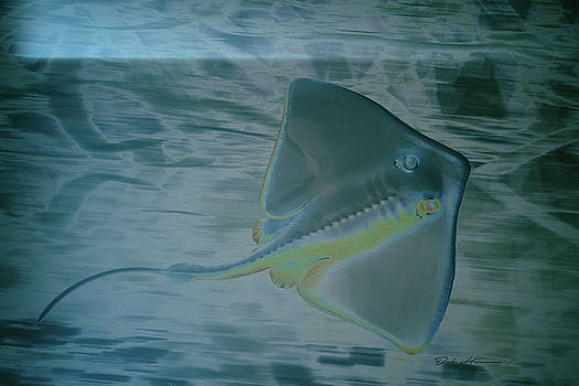 Sting Ray  by Deb Henman