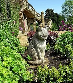 Stone Cat by Patrick J Murphy