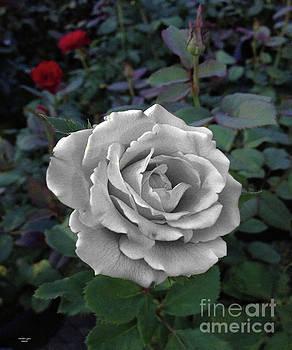 Stone Rose by Wanda-Lynn Searles