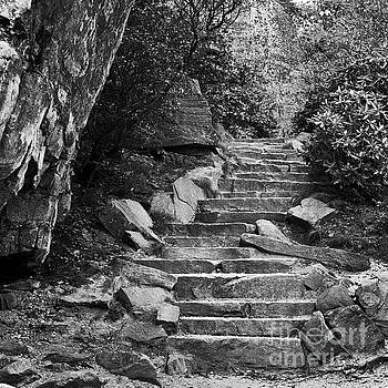Stone stairway by Patrick M Lynch