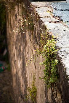 Stone Wall by Amanda Adkisson