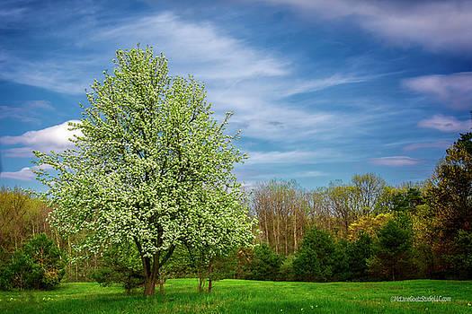 Stoney Creek Spring by LeeAnn McLaneGoetz McLaneGoetzStudioLLCcom