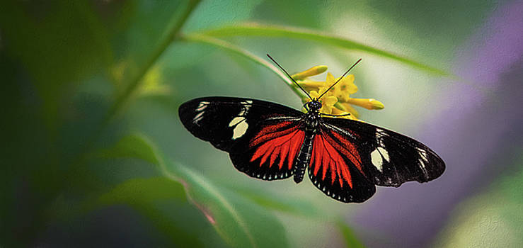 Butterfly, Stop and Smell the Flowers by Cindy Lark Hartman