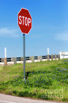Stop For The Blue Bonnets by Joan Bertucci