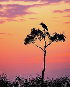 Susan Schmitz - Stork on Acacia Tree in Africa at Sunrise