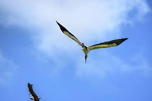 Stork Surprise by William Tasker