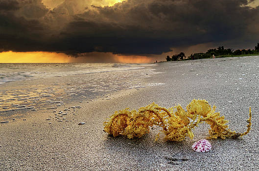 Storm And Sea Shell On Sanibel by Greg Mimbs