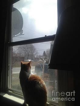 Storm Cat by Iris Newman