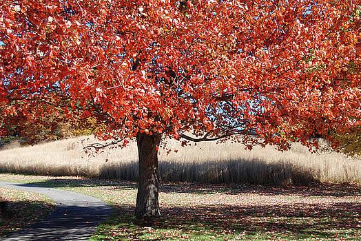 Storm King tree II by Marilu Windvand
