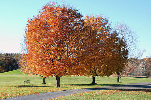 Storm King tree III by Marilu Windvand