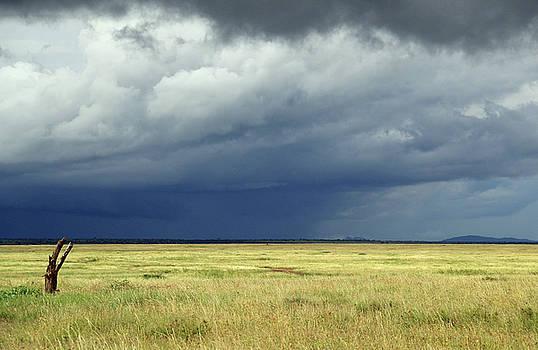 Storm on the Serengeti by Ann Sullivan