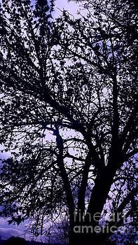 Nick Gustafson - Storm through the trees