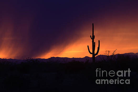 Storms brew in Scottsdale by Ruth Jolly