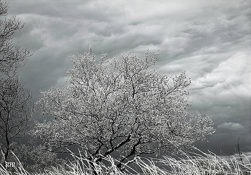 Stormy Day by Stacie Fernandes