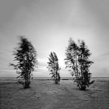 Stormy Day  by Stelios Kleanthous