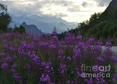 Stormy Fireweed by Zeb Congdon