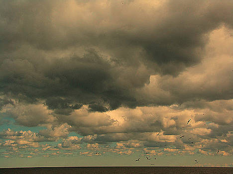 Stormy Flight by Deb Ingram