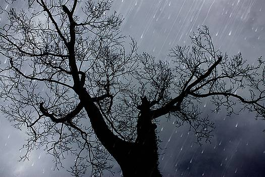 Stormy Night by Carol Turner