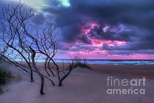 Dan Carmichael - Stormy Outer Banks Sunrise and Bush