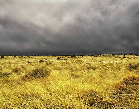 Stormy Weather by Winnie Chrzanowski