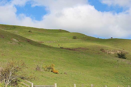 Storybook Hills  by Lucie Buchert