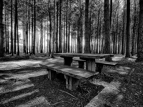 Stover Country Park in Black and White by Jay Lethbridge