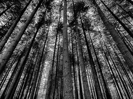Stover Trees in Black and White by Jay Lethbridge