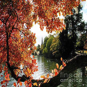Stratford On Avon Autumn Leaves by Neil Finnemore