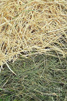 Straw and hay close up background by Deyan Georgiev