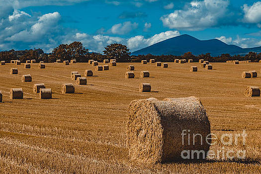 Marc Daly - Straw bale in a field