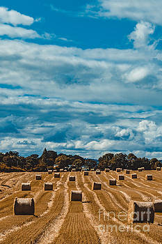 Marc Daly - Straw bales in a field 2