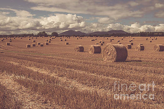 Marc Daly - Straw bales in a field 4