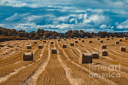 Marc Daly - Straw bales in a field