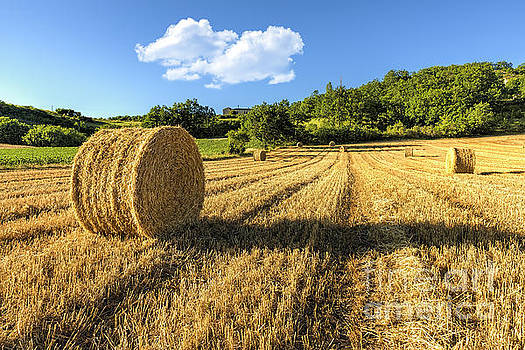 Straw Bales by Tony Priestley