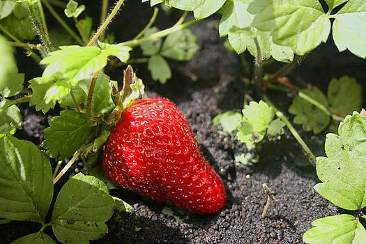 Strawberry by Cynthia Saliba