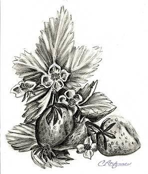 Strawberry delight by Carol Allen Anfinsen