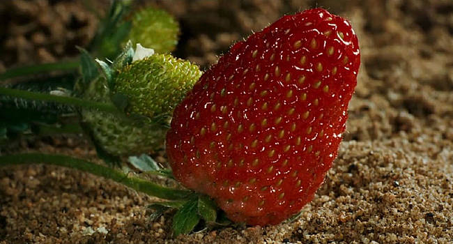 Strawberry by Digital Art Cafe