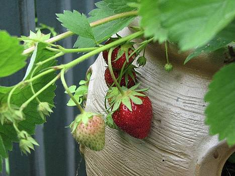 Strawberry Pot by Sandra Bourret