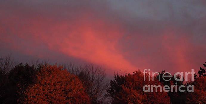 Sandra Huston - Strawberry Sunset Panorama