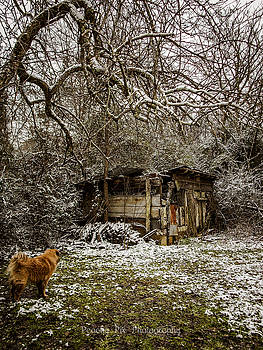 Stray and Decay by Stacy Sikes