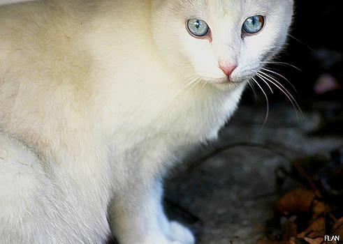Stray Cat 2 by Ruben  Flanagan