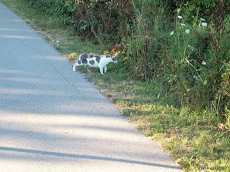 Stray Cat by Lisa Stunda